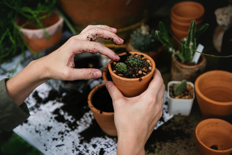 Troc de plantes et boutures - atelier jardin sur balcon jardinage