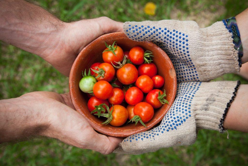 Bol rempli de tomates cerises tenu par quatre mains